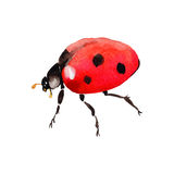 Exotic ladybug wild insect in a vector style isolated. Stock Image