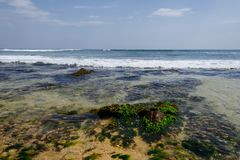 Exotic landscape with stones and seaweed in ocean, sea stock photo