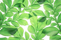 Exotic large tropical jungle leaf, stock images