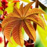 Exotic Leaf Royalty Free Stock Photos