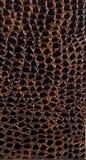 Exotic leather Stock Image
