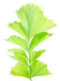 Exotic leaves. On white background stock image