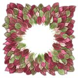 Exotic leaves in green and pink decorated in a circle. Can be used as background Royalty Free Stock Image