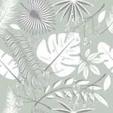Exotic leaves, rainforest. Seamless realistic tropic leaf pattern. Palm leaf, banana leaf, hibiscus, plumeria flowers. Jungle tree Royalty Free Stock Images