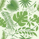 Exotic leaves, rainforest. Seamless realistic tropic leaf pattern. Palm leaf, banana leaf, hibiscus, plumeria flowers. Jungle tree Stock Photo