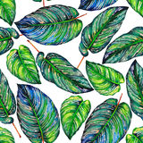 Exotic leaves seamless background. Stock Image