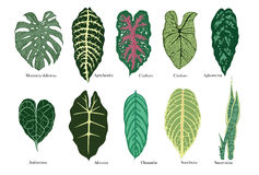 Exotic leaves vector set. Color. Stock Photo
