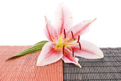 Exotic Lily Stock Photo