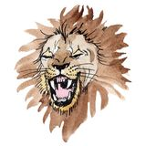 Exotic lion wild animal in a watercolor style isolated. Watercolor background illustration set. Exotic lion wild animal in a watercolor style isolated stock photo