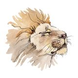 Exotic lion wild animal in a watercolor style isolated. Watercolor background illustration set. Exotic lion wild animal in a watercolor style isolated stock image