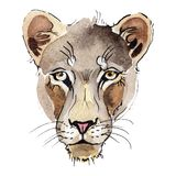 Exotic lion wild animal in a watercolor style isolated. Watercolor background illustration set. Exotic lion wild animal in a watercolor style isolated royalty free stock image