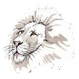 Exotic lion wild animal in a watercolor style isolated. Watercolor background illustration set. Exotic lion wild animal in a watercolor style isolated royalty free stock photography
