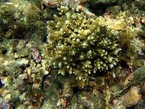 Exotic marine life Stock Photos