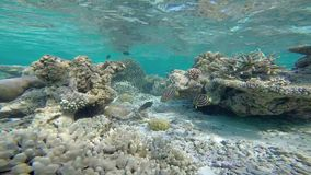 Exotic marine life near Maldives island stock footage