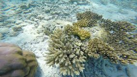 Exotic marine life near Maldives island stock video footage