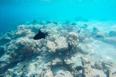 Exotic marine life near Maldives island Royalty Free Stock Image