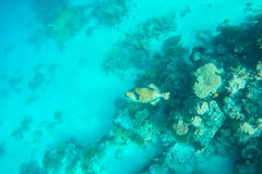 Exotic marine life near Maldives island Stock Images