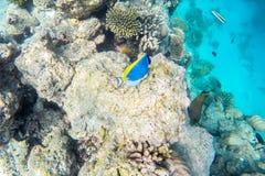 Exotic marine life near Maldives island Stock Photos
