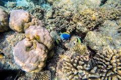 Exotic marine life near Maldives island Royalty Free Stock Photography