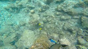 Exotic marine life near Maldives island. Tropical summer vacation concept stock video
