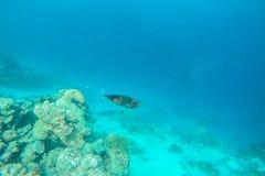 Exotic marine life near Maldives island Royalty Free Stock Photo