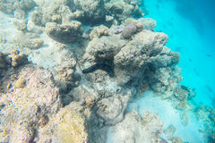 Exotic marine life near Maldives island Royalty Free Stock Images