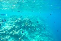 Exotic marine life near Maldives island Stock Photo