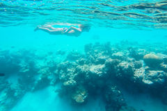 Exotic marine life near Maldives island Royalty Free Stock Photos