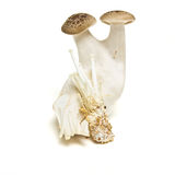 Exotic Mushrooms Stock Photography
