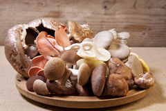 Exotic mushrooms Royalty Free Stock Photo