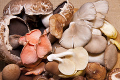 Exotic mushrooms Royalty Free Stock Images