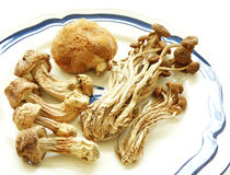 Exotic mushrooms, dried chinese foodstuff. An image showing an assortment of dried oriental mushrooms - with some dried oriental willow mushrooms, or brown tea stock photography