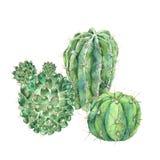 Exotic natural vintage watercolor blooming cactus greeting card. Exotic natural vintage watercolor cactus greeting card. Cactus, succulent, flowers. Botanical royalty free illustration