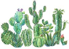 Exotic natural vintage watercolor cactus greeting card. Cactus, succulent, flowers, plant, aloe vera. Botanical isolated natural Illustration on white vector illustration