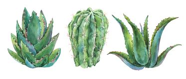Exotic natural vintage watercolor cactus greeting card. Cactus, succulent, plants, aloe vera. Botanical isolated natural Illustration on white background vector illustration