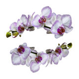 Orchids Isolated Stock Images