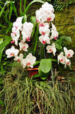 Exotic orchid plant Stock Photo