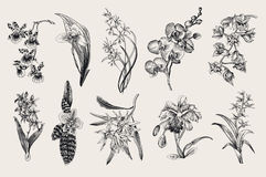 Exotic orchid set. Botanical vector vintage illustration. Royalty Free Stock Image