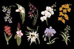 Exotic orchid set. Botanical vector vintage illustration. Stock Photos