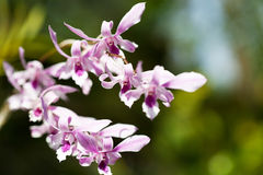 Exotic orchids Stock Photography