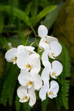 Exotic orchids Royalty Free Stock Photo