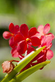 Exotic orchids Stock Image