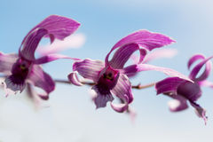 Exotic orchids Royalty Free Stock Photos