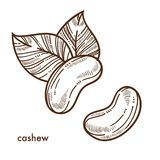 Exotic oriental tasty cashew nuts with big leaves Stock Photos