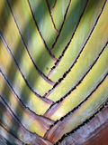 Exotic palm Royalty Free Stock Photography