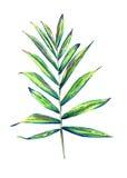 Exotic palm leaf stock illustration