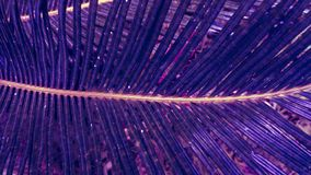 Exotic palm leaves in purple blue gradient tone. stock image