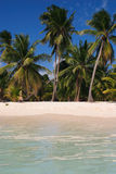 Exotic Palm lined Caribbean beach Royalty Free Stock Photo