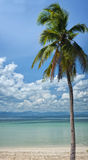 Exotic palm tree. An exotic palm tree on a small island beach overlooking mainland Thailand Royalty Free Stock Photos