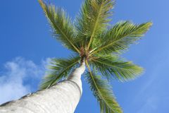 Exotic palm tree on the beach Royalty Free Stock Image